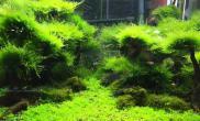 60缸55天小树林