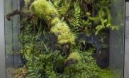 超详细的雨林缸建缸过程水草缸想玩雨林的朋友别错过