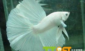 适合新手饲养的鱼种有哪些