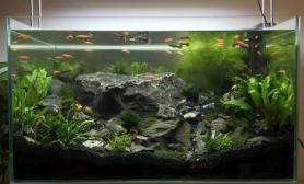 我的60×36×35石景缸水草缸请大家点评鱼缸水族箱