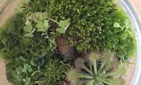 谁知道这是什么苔藓啊