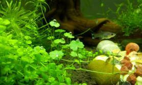 新人的菜园子鱼缸水族箱大神轻喷鱼缸水族箱