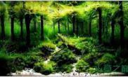 鱼缸造景除了沉木杜鹃根水草缸还有什么木能沉水?