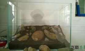 鱼缸造景新开的缸水草缸大家将就看看