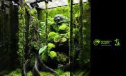 苔纤X1底床深森GREEN雨林水陆生态缸丽斑兰苔藓金线莲苦瓜石斛兰秋海棠