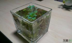 水草造景办公室桌面小缸小瓶