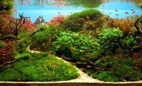 水草缸造景沉木水草泥化妆砂青龙石150CM及以上尺寸设计40