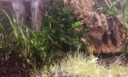晒晒我的迷你凤尾蕨水草缸好久没来南美了