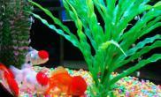 养金鱼的鱼缸怎么布置和选择