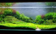 水草缸造景沉木水草泥化妆砂青龙石60CM尺寸设计60