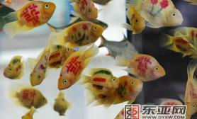 冬季农博会各式各样长相奇特的观赏鱼(图)