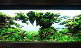 沉木青龙石水草造景150CM及以上尺寸设计37