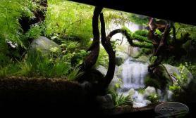 水族箱造景水草造景---重温林间瀑布