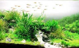 【赢阳光几何全光谱LED】我们的水草梦