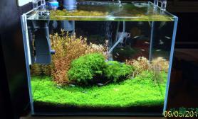 水草造景开缸2个半月水草缸就一张