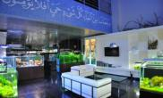 卡塔尔精品水族店