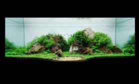 沉木青龙石水草造景150CM及以上尺寸设计25