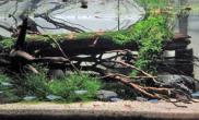 极简派水族造景水草缸造景少即是多的简约风格