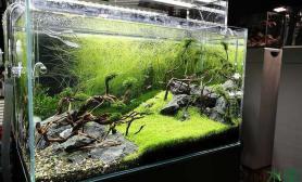 鹅鹅鹅水草缸曲项向天歌水族箱
