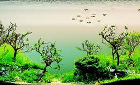 浣溪凝翠--我的水景翻缸自白