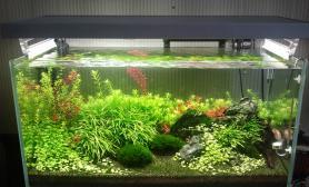 90草缸修剪前后水草缸后景宫廷终于要成景了鱼缸水族箱