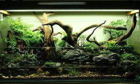 水族箱造景大型水陆景观首发鱼缸水族箱(水景缸改水陆缸)