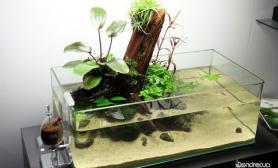 敞口矮缸沉木水陆缸