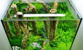 水草缸造景沉木水草泥化妆砂青龙石45CM及以下尺寸设计30