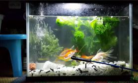 【赢阳光几何全光谱LED】以前的小鱼缸(2)