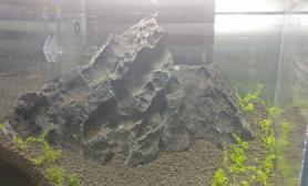 珊瑚莫斯粘石头什么位置好呢