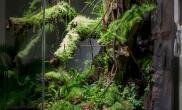 雨林生态缸rabu92水陆水草缸DIY全过程详细图解