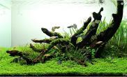 沉木青龙石水草造景45CM及以下尺寸设计35