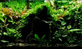 雨林无水沼泽Miscellaneous生态缸