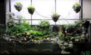 120水陆缸加悬浮山水草缸简直是逆天了鱼缸水族箱