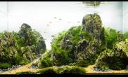 ADA2014IAPLC ---NO.77  蒼际岩