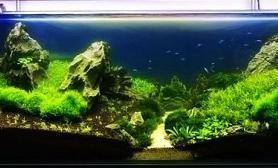 原创造景鉴赏水清了修剪了改动了1.5米草缸造景