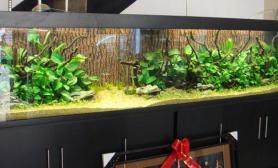 山西太原曾经的3米大草缸
