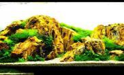 转一个世界著名的水草造景