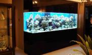鱼缸大小的选择分析