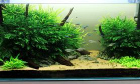 90厘米阴草缸水草缸开缸两个月水草缸基本成景水草缸大图在内