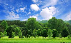 【赢阳光几何全光谱LED】树景