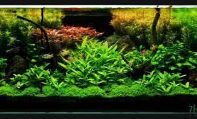 主题为沉木、石头的水草缸
