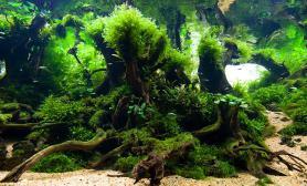 水草造景(120CM)水草鱼缸造景青龙石摆石