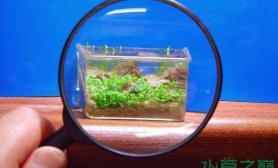 水族箱造景超酷奈米水草造景