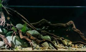 沉木青龙石原生态鱼缸28