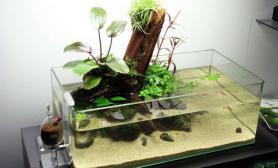 这样的敞口水陆缸水草缸你见过吗?
