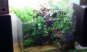 诶呦水草缸不错哦水草缸这样的水陆缸很耐看
