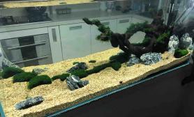 挑战阴性草七彩缸第一阶段之开缸所有素材来源南美鱼友