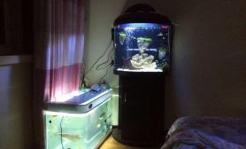 新手新开鱼缸水草缸望指教鱼缸水族箱