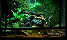 雨林水陆生态缸11